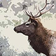 Painted Bull Elk Poster