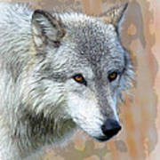 Painted Grey Wolf Poster