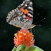 Painted Lady In A Shower Poster