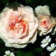 Pale Pink Roses In Garden Poster