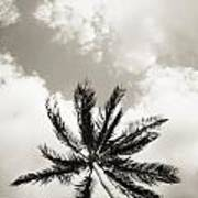 Palm And Sky Poster