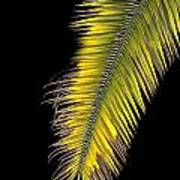 Palm Frond Against Black Poster