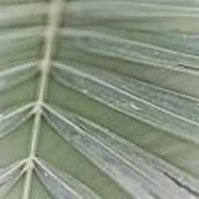 Palm Leaf Poster