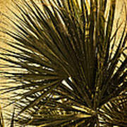 Palm Leaves 2 Poster