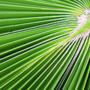 Palm Tree Frond Poster