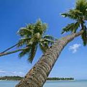 Palm Trees On A Tropical Beach, Fiji Poster