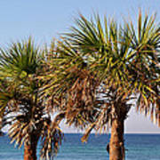 Palm Trees Poster by Sandy Keeton