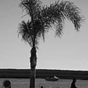 Palm Walk Poster