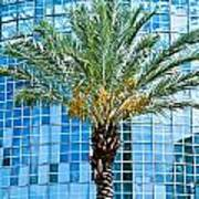 Palme Tree And Blue Building Poster