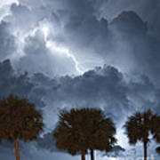 Palms And Lightning 5 Poster