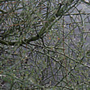 Palo Verde In The Rain Poster