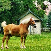 Palomino In Pasture Poster