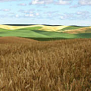Palouse Rolling Hills Poster