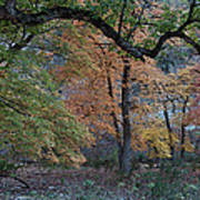 Panorama Of Fall Colors At Lost Maples Poster