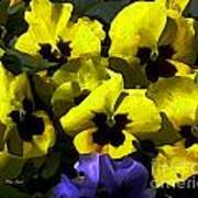 Pansy Party Poster