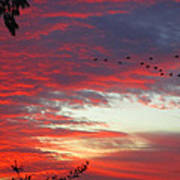 Papaya Colored Sunset With Geese Poster