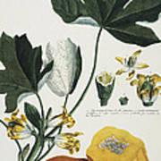 Papaya Poster
