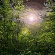 Paradise At Dawn Poster