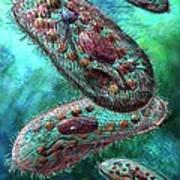 Paramecium Poster