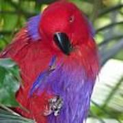 Parrot Attitude Poster
