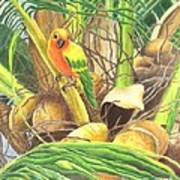 Parrot In Palm Poster
