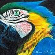 Parrot Miniature Poster