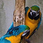 Parrot Talk Poster