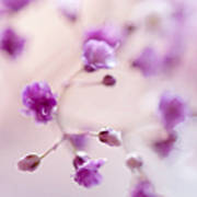 Passion For Flowers. Purple Pearls Of Gypsophila Poster