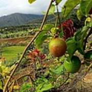 Passionfruit On The Vine With A View Of The Valley   Maui Poster by J R Stern