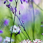 Pastel Wildflowers Poster by David Lade