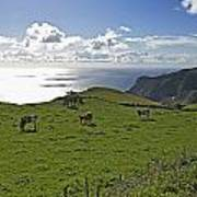 Pastoral Landscape Of Santa Maria Island Poster