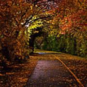 Path At Night Poster