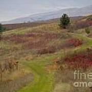 Paved In Green Poster by Idaho Scenic Images Linda Lantzy