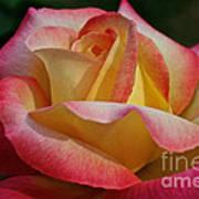 Peaceful Petals Poster