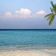 Peaceful Tropical Beach With One Palm Tree Poster