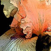Peach Iris Digital Art Poster
