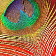 Peacock Feather 2 Poster
