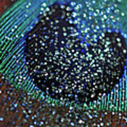 Peacock With Bling Poster