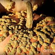 Peanut Pumpkins Poster