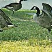 Pecking Order Poster