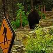 Pedestrian Crossing My Big Bear Booty Poster