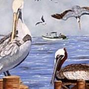 Pelican Bay Poster
