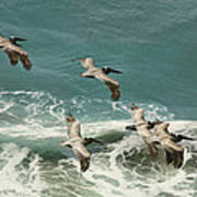 Pelicans In Flight Over Surf Poster by Gregory Scott
