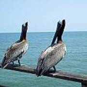 Pelicans On The Pier Poster