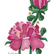 Peony In Pink Poster by Anne Norskog