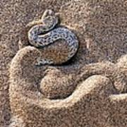 Peringuey's Adder Burying Itself In Sand Poster