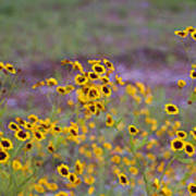 Perky Golden Coreopsis Wildflowers Poster