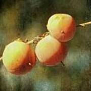 Persimmons Poster