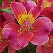 Peruvian Lilies Poster
