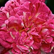 Petals Petals And More Petals Poster